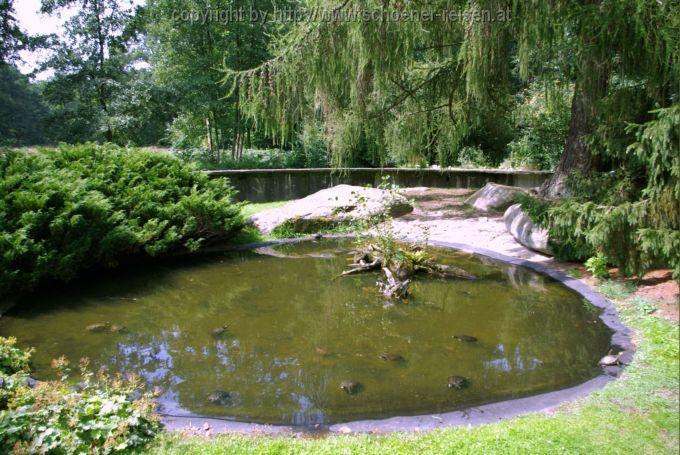 Bremen gt botanischer garten gt schildkr 246 tenteich
