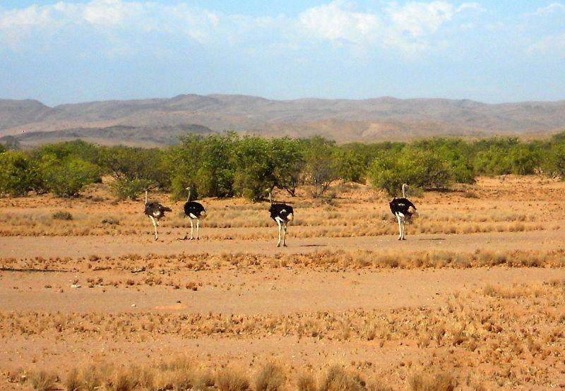 Namibia Reisen Forum