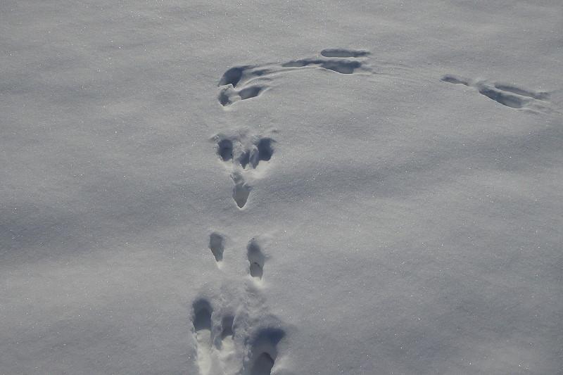 tierspuren verfolgen im schnee und anderswo tiere schoener reisen. Black Bedroom Furniture Sets. Home Design Ideas