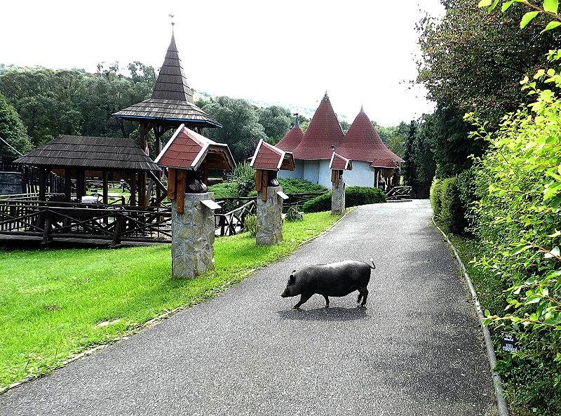 http://www.schoener-reisen.at/Bildergalerie/data/media/654/velem_milleniumspark_7_2.jpg