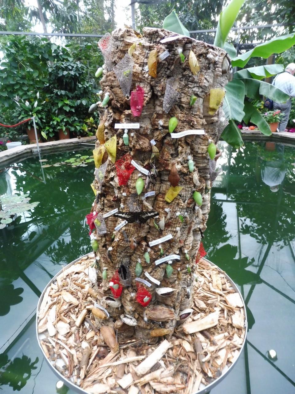 schmetterlinge im botanischen garten augsburg bayern schoener reisen forum reiseberichte. Black Bedroom Furniture Sets. Home Design Ideas