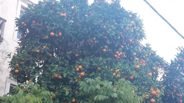 Früchte in Vela Luka