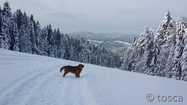 Sammy im Schnee