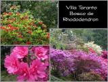 Bosco de Rhododendron